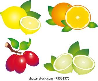 Set of fruit. Illustration on white background