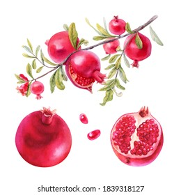 Set of fruits, pomegranates on an isolated white background, botanical watercolor, hand drawing