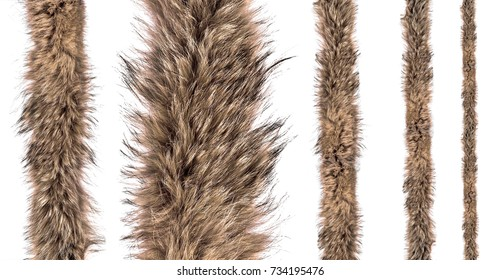 Set of fur fox on an isolated white background. Different sizes of fur belts for sewing.