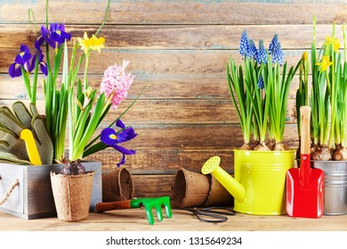 Set of gardening tools and seedling of spring flowers for planting on flowerbed in the garden. Horticulture concept.
