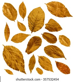 Set of golden and bronze laurel leaves isolated on white