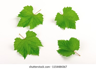 Set of grape leaves on white background.