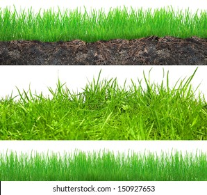 Set of grass in soil isolated on white