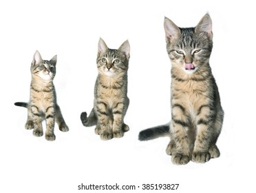 Set of gray young cats isolated on white background