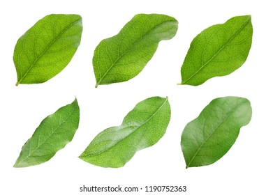 Set with green apple tree leaves on white background
