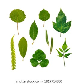 Set of green leaves isolated on white. Collection of nature forest plants - Shutterstock ID 1819714880