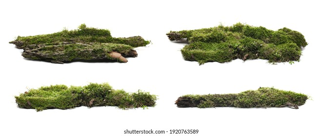 Set green moss on rotten bark tree isolated on white background