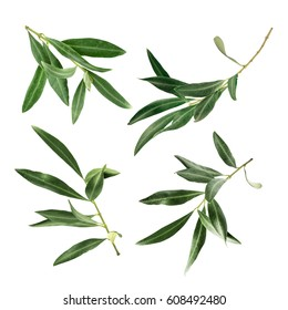 A set of green olive branch photos, isolated on white