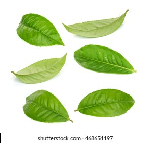 set of green tea leaf isolated on white