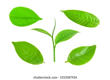 set of green tea leaves isolated on white background