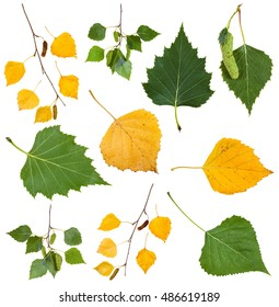 set from green and yellow autumn leaves of birch tree isolated on white background