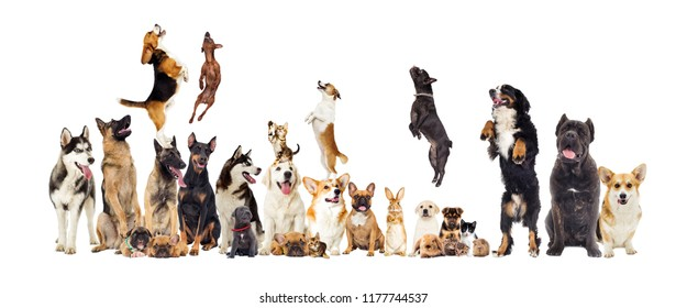 set, group of pets looking at white background