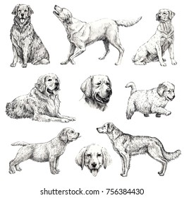 Set of hand drawn ink dogs sketches. Retriever, labrador. Ink animals illustrstion. Isolated on white