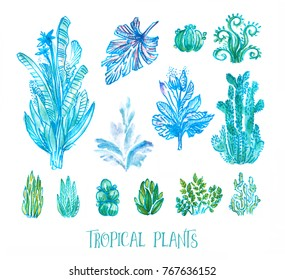 Set of hand drawn tropical plants and succulents isolated on white. Marker pens and watercolor