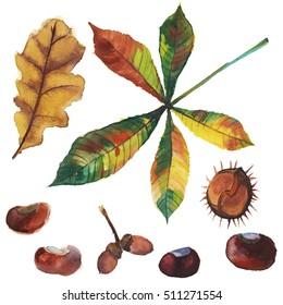 Set with hand drawn watercolor elements: acorn, chestnut, oak tree leaf. Fall illustration.