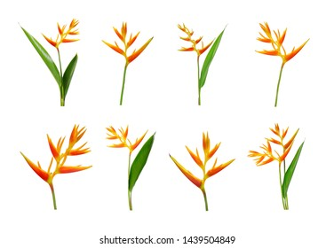 Set of Heliconia flowers isolated on white background.