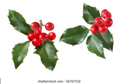 Set of  holly sprigs isolated on white background