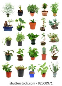 Set of houseplant and bonsai trees