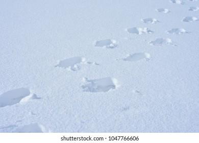 Set of human footprint on snow