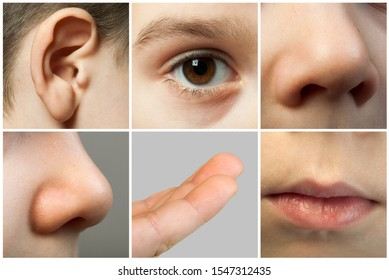 Set of the human senses. Parts from the child's face. Nose, eye, ear, lips and fingers.