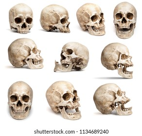 set of human skulls in different angles. Isolated on white background
