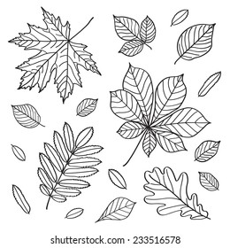 Set of images of leaves of different trees. Hand drawing. Black and white image.