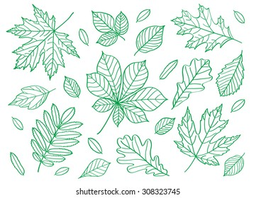 Set of images of leaves of different trees. Hand drawing summer leaves. Sketch, design elements.