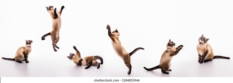 A set of images of a playful cat that plays, jumps, grabs, sways on the floor