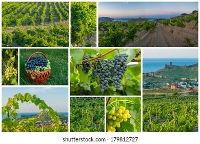 Set with images of vineyards and grapes close-up