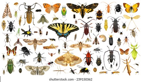 Set of insects on a white background