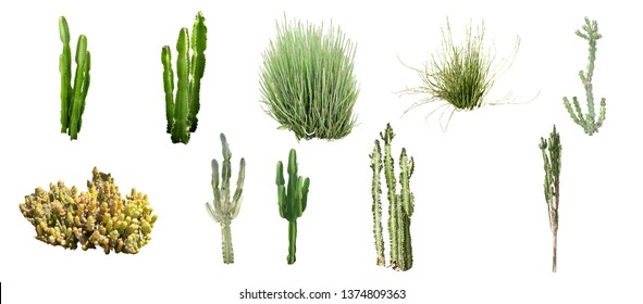 set of isolated shrub and cactus on white background with clipping paths