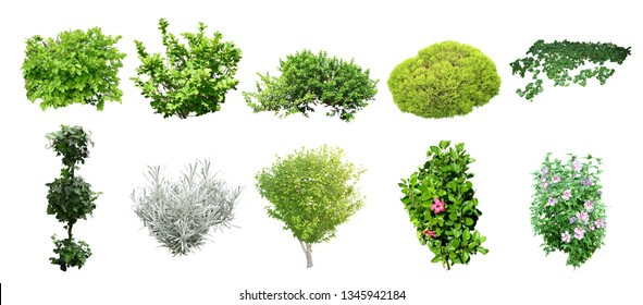 set of isolated shrub on wihite background with clipยing paths