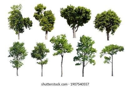 Set of isolated trees on white background.