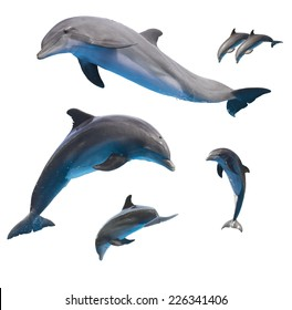 set of jumping dolphins isolated on white background