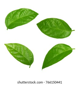 set of leaves of passion fruit isolated