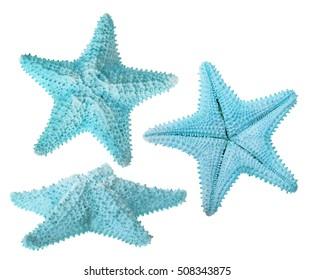 set of light blue starfishes isolated on white background