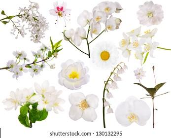 set of light flowers isolated on white background