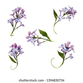 Set of lilac flowers and leaves isolated on white
