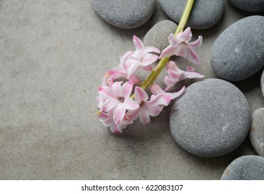 Set of Lilac (perfumed )on pile of stones-gray background