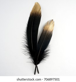set of luxury gilded gold golden black swan feather on white background