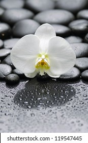 Set of macro of white orchid with pibbles after rain