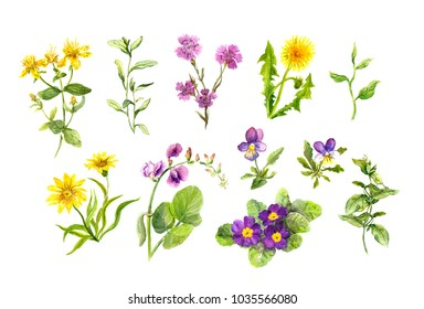 Set of meadow flowers, plants, grass. Spring, summer natural watercolor collection