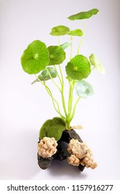 Set Moss Ball and plant For Fish Tank Aquarium Decoration, image 4