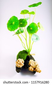 Set Moss Ball and plant For Fish Tank Aquarium Decoration, image 3