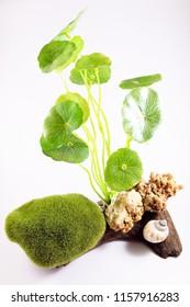 Set Moss Ball and plant For Fish Tank Aquarium Decoration, image 1