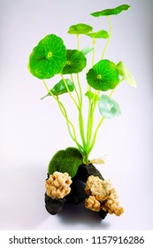 Set Moss Ball and plant For Fish Tank Aquarium Decoration, image 5
