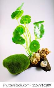 Set Moss Ball and plant For Fish Tank Aquarium Decoration, image 2