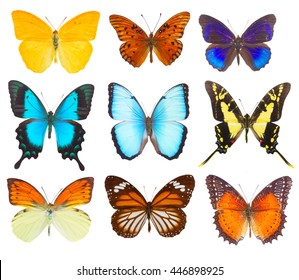 set of multicolored tropical flying batterflies isolated on white background