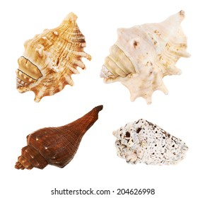 Set of a multiple sea shells, isolated over the white background