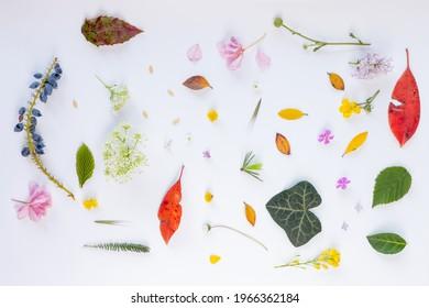 set of natural leaf and flowers on light back ground